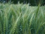 Kviečiame į tradicinę žemdirbių šventę